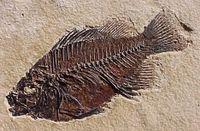 Fossil_fish